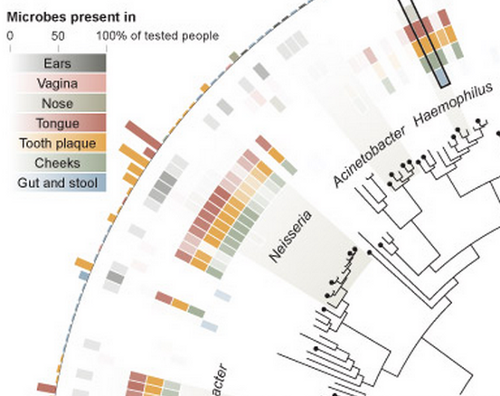 A partial image of a New York Times graphic showing some microbes mapped by the Human Microbiome Project