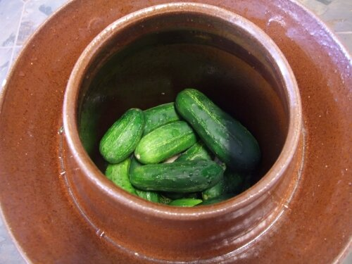cucumbers in a pickling crock