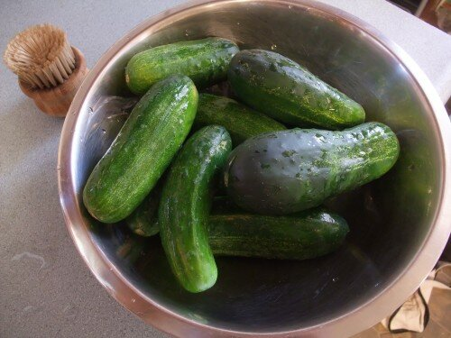 pickling cucumbers in a bowl